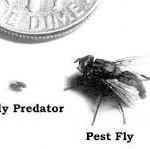 Fly Predators